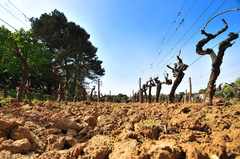 Dans les vignes du Château Bonisson ...